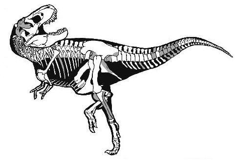 20110520083123sampson-tyrannosaurus-skeleton.jpg