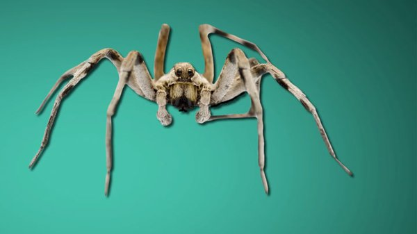 Preview thumbnail for Ask Smithsonian: How Do People Get Phobias?