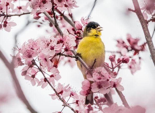 Spring Fling thumbnail