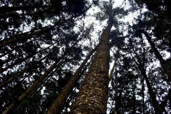 Karura Forest thumbnail