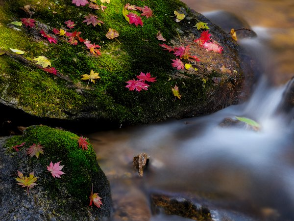 Autumn leaves and running water thumbnail