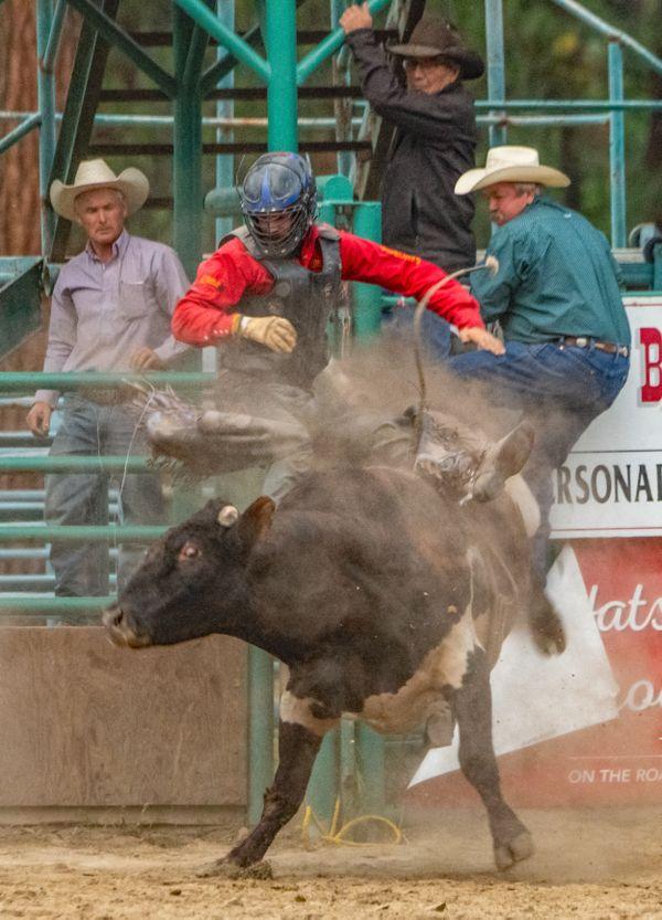 Bull Riding 8 thumbnail
