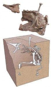 20110520083216seitaad-skeleton-embedded-176x300.jpg