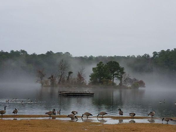 Fog settle on the Pond. thumbnail