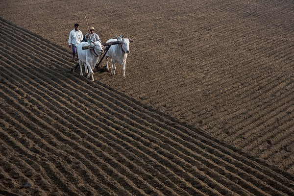 Agriculture thumbnail