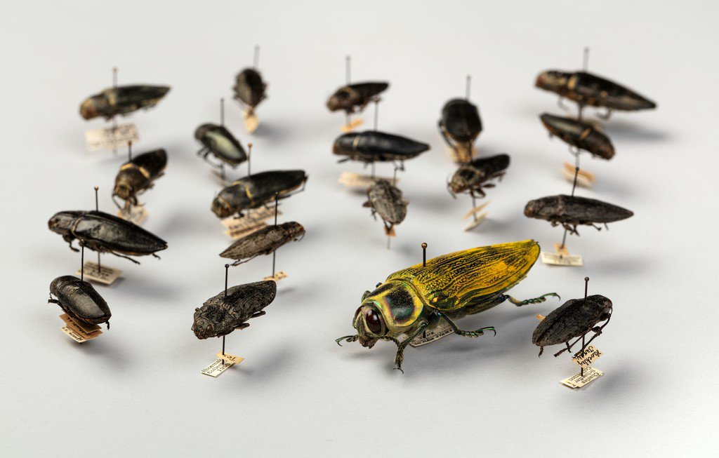 Nineteen preserved insects pinned to a white container
